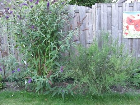 Beesten in de tuin john sanders for Vliegen in de tuin
